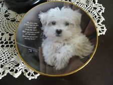 The Danbury Mint Cherished Maltese Collectible Plate Pawprints on My Heart C4487