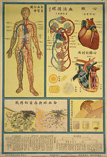 Framed Vintage Chinese Medical Print – Heart & Circulatory System (Picture Art)