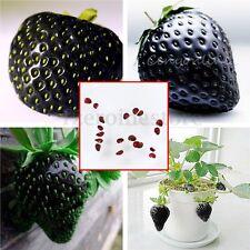 20pcs Raro Súper Delicioso Negro Fresa Semillas Plantas fruta Black Strawberry