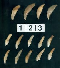 (10) Buffalo & 4 Canine Teeth, South Dakota, Loitwood Collection, Gettysburg Sd