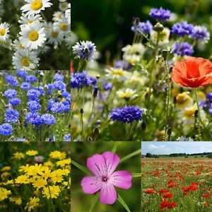 Wild Flower Seed Mix - Cornfield Meadow Flower Seeds Bee Friendly Native Annuals