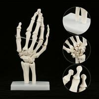 Medical Anatomical Life-size Human Hand Joint Study Skeleton Model GS