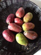 10 Cactus Pear Seeds Opuntia ficus