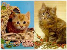 OLD Nice set lot 2 pcs CAT Kitten PC post card 1980th Spain feline used LOVELY