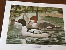 Rex Brasher's ( Water Fowl ) 12 color prints Birds of North America Collection