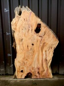 Wide Waney Edge Live Edge Character Pippy Yew Slab