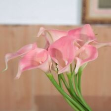 Pink Calla Lily 2 Bulbs Balcony Potted Bonsai Patio Aethiopica Flower Garden