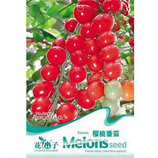 FD1398 Red Tomato Seed Small Variety tomato Seed Lycopersicon esculentum 30 ✿