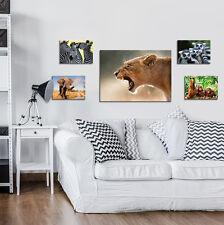 SET (5 teilig) CANVAS Leinwandbild Poster Bilder Tieren Afrika Natur 3FX2668S14