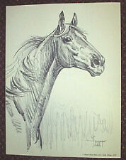 ONE HORSE Original Charcoal Print / Sam Savitt 1973