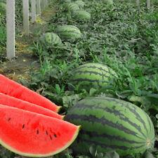 50PCS Wassermelone Crimson Sweet Samen fruchtig süß Wassermelonensamen GUT