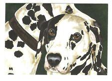 DALMATIAN DOG Blank Greeting Card w/ Envelope Tanya & Craig Amberson G8