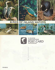 1980's BIRDS OF INLAND WATERS UNUSED COLOUR POSTCARD