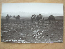 VINTAGE WWII POSTCARD MOUNT HERMON SHOWING CAMELS SYRIA 1945