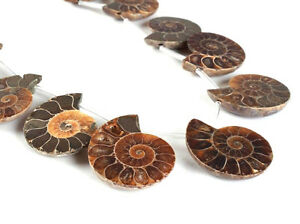 0089 10pcs Side drilled Ammonite fossil loose gemstone beads 25mm to 35mm