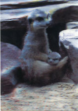 Meerkat Suricate - 3D Lenticular Postcard Greeting Card - Wildlife