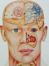 Vintage Anatomical Chromographs of Clinical Symptomatology Parke-Davis Booklet