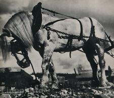 1931 Original NORA DUMAS Clydesdale Horse Farm Animal Photo Gravure Art 11X14