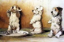 Cecil Aldin Art Print Westie West Highland & Jack Russell Terrier Dog Begging