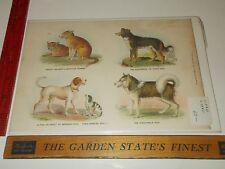 Rare Antique 1880 Dog Type Esquimaux Samuel Walker & Co Boston Litho Color Print