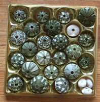 Dried Sea Urchin 28 PC LOT ~ ALL NATURAL VARIETY Multiple Sizes