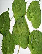 10 Korean Shiso Perilla Seeds ASIAN DELICACY