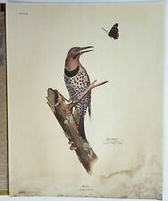 Ray Harm Print Lithograph Flicker Bird Signed Print with Original Folder 20×16