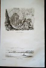 47-3-22 Gravure XIX° arbre du voyageur, Vue de Tintingue (Madagascar)