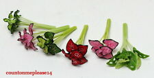 Miniatures Plants Caladium multi color White clay Nice Handcrafted  1:12 approx.