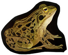 Frog stained glass fragment, kilnfired, frog suncatcher, grenouille vitraux