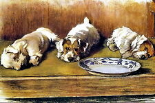 Cecil Aldin Art Print Westie West Highland Jack Russell Terrier Dog Sleeping