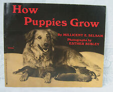 How Puppies Grow Softcover Vintage 1971 Scholastic Book By 0Millicent E. Selsam