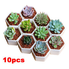 10x Ceramic Succulent Plant Pots Miniature Flower Planter Pot Nursery Container