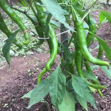 25+ Rare Premium Fushimi Pepper Seeds Organically Grown-T 41