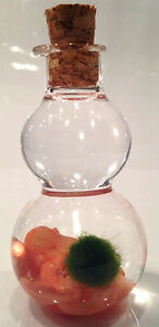 Baby Marimo Lucky Plant Moss Ball in Glass Bottle w Pink Sea Bamboo Gemstones