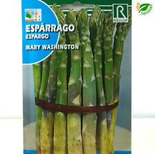 Esparrago Mary Washington ( 3 gr / 150 semillas aprox ) seeds - espárrago