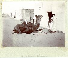 Algérie, travailleurs Sahariens avec leur dromadaire  vintage citrate print, T
