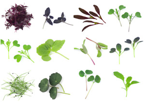 Microgreen Seeds - Vegetable - Herb - Spice, Sprouting - 30 verities - 1st Class