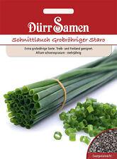 Schnittlauch Staro grobröhrig Allium schoenoprasum 500 Pflanzen Dürr Samen