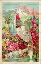 Furniture Decal Vintage Image Transfer Tropical Bird Upcycle Shabby Chic Antique