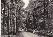 # MONTE S. ANGELO: FORESTA UMBRA - VIALE S. ANTONIO