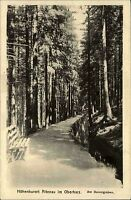 ALTENAU b. Goslar um 1910 alte AK Bäume Allee Baum Wald Partie am Dammgraben