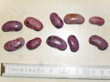 Stangenbohne Blauhilde 105185 Saatgut Bohne Sämereien Hülsenfrüchte Gemüse Samen