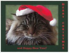 Postcard Serious Maine Coon Cat Says Merry Christmas and Happy New Year