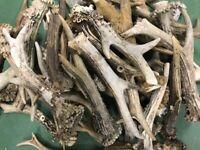 1Kg Corna di capriolo Vecchie - Usate - Rotte. corno, caccia, cervo, IT