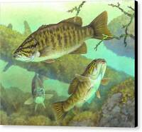 Smallmouth Bass by Timothy Knepp Wildlife Fish Outdoor Canvas Art Print 16x20 🧡