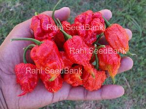 Carolina Reaper Chilli - Pure Strain World's Hottest - 10 Australian Grown Seeds