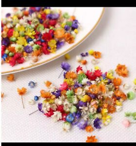 200x Real Dried Flowers For DIY Art Crafts Epoxy Resin Candle Making Jewellery