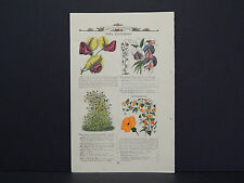 James Vick Seed Catalog Rocheter, N.Y. Flowers/ Vegetables, Hand Colored #02