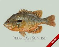 Redbreast Sunfish Fish Painting America Freshwater Fishing Art Real Canvas Print